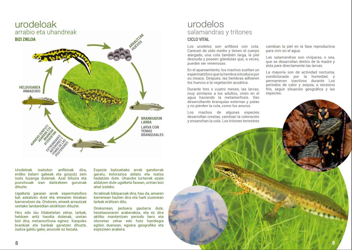 Anfibios-y-reptiles-Lurgaia-1
