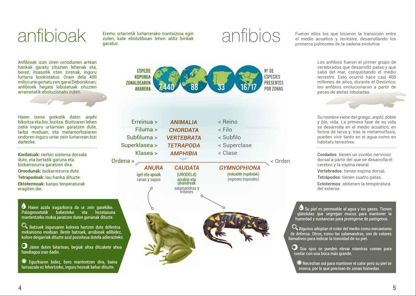 Anfibios-y-reptiles-Lurgaia-2