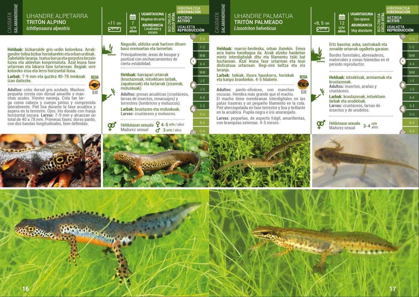 Reptiles-Lurgaia-1