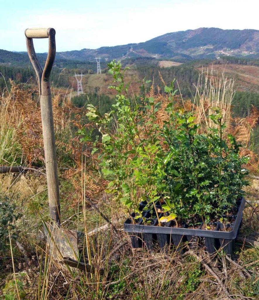 Undabaso-plantas-gorosti